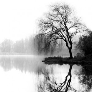 Upland Consulting: Should Your Accountant be on Your Board? Black and white photo of trees reflected in still water