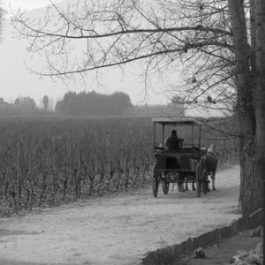 Upand Consulting, family business. Black and white photo, vineyard horse and cart in the mist